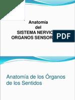 11-ANATOMIA SISTEMA NERVIOSO-SENTIDOS.ppt