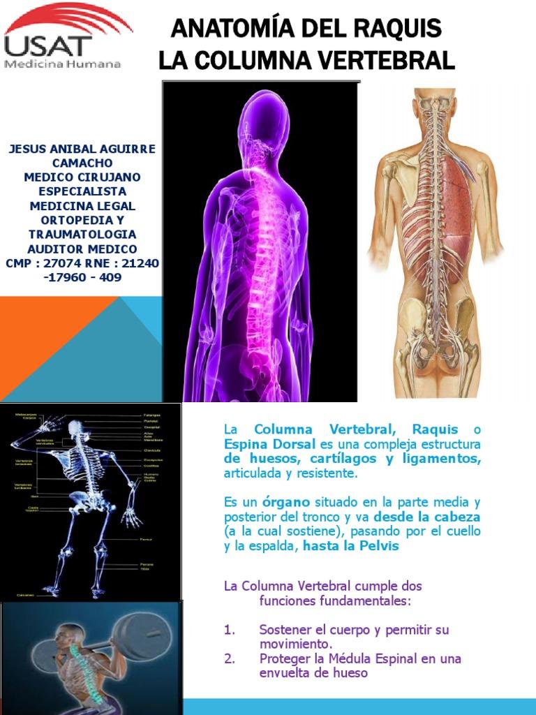 CLASE COLUMNA VERTEBRAL DR AGUIRRE.pdf