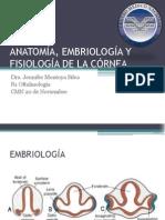 Anato, embrio, fisio de córnea