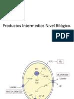 Productos Intermedios Nivel Bilógico