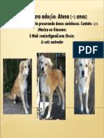 Adopcion Atena