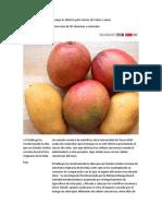 Descubren Que Fruta de Mango Es Efectivo Para Cáncer de Colon y Senos
