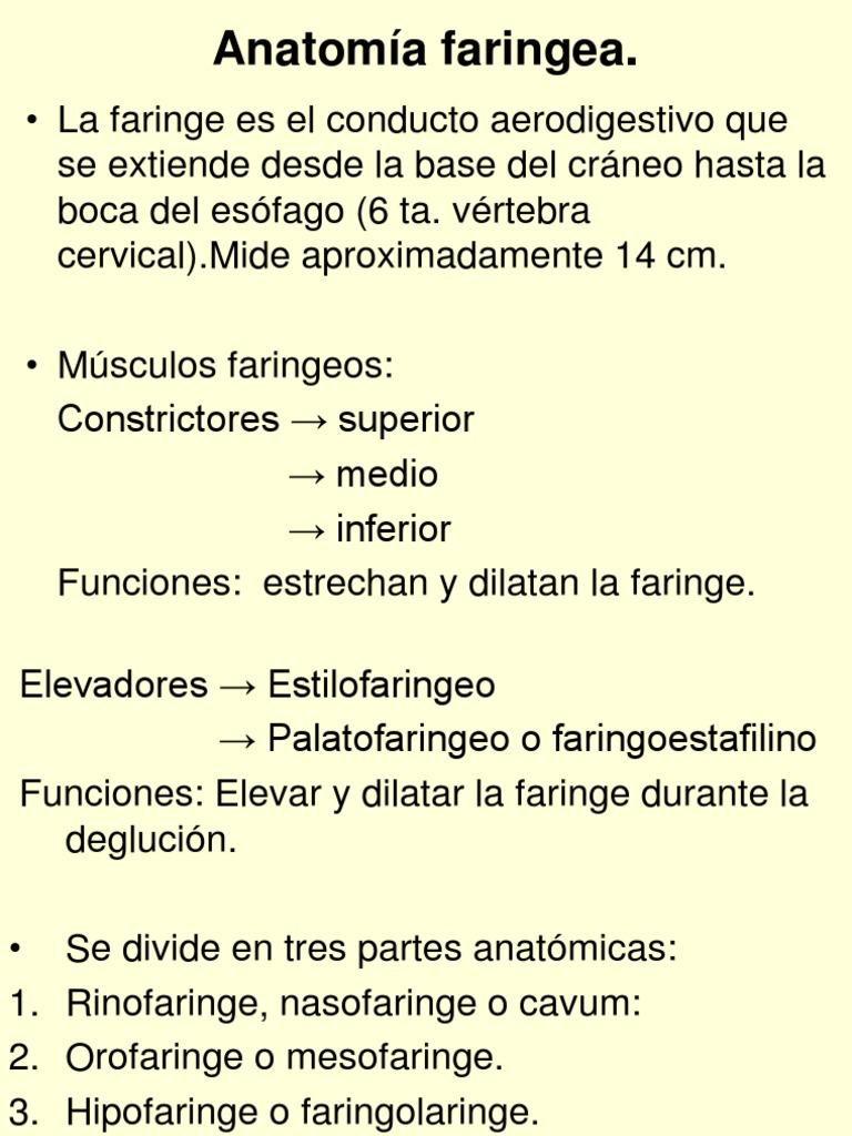 7377695-Anatomia-Faringea.ppt