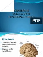 Cerebrum Sulci and Gyri and Circle of Willis