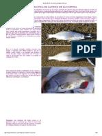 Guía Practica de La Pesca de La Corvina