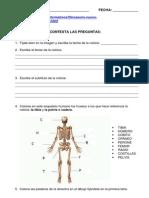 NOTICIA-NUEVA ESPECIE DINOSAURIO.pdf