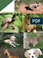 Presentacion de Animales