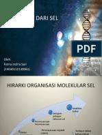 Komponen Molekular Dari Sel