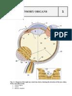 Sensory Organs histological examination atlas
