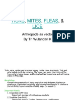 Ticks, Mites, Fleas, Lice as a Vector