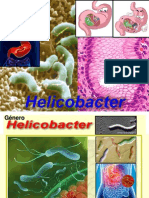 HELICOBACTER 2014.ppt
