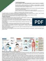 Aprende a Diferenciar Dengue