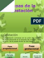 Etapas y Producción Hormonal Durante La Gestación