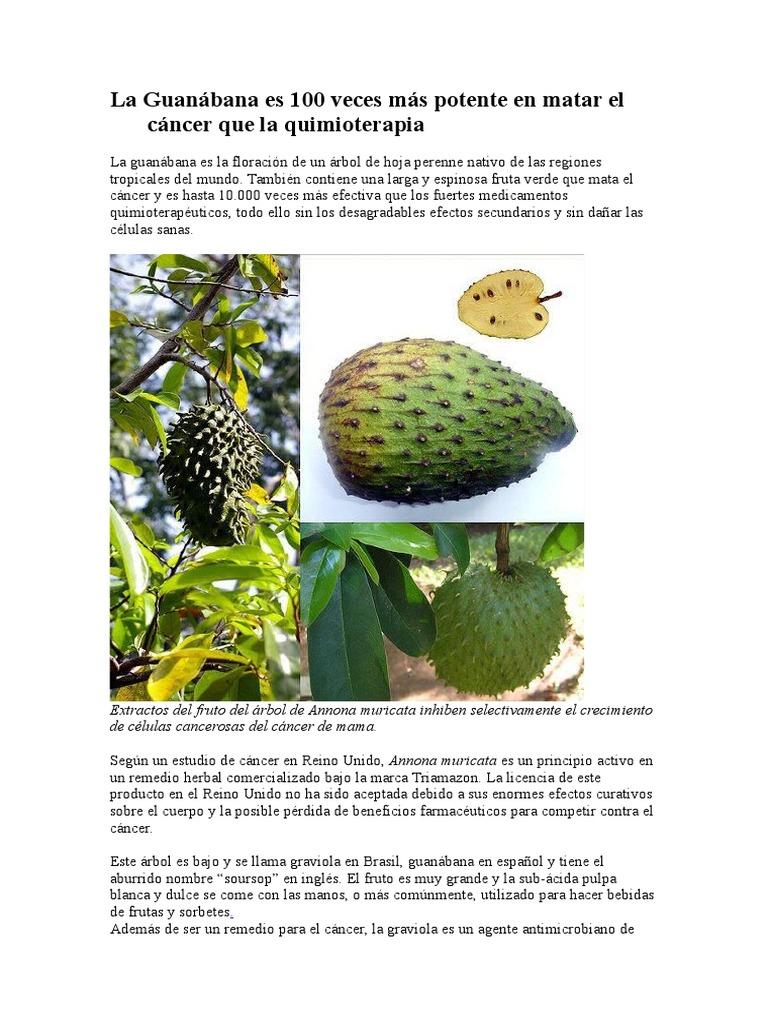 La guanabana y sus propiedades pdf