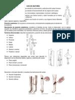 Guía de Anatomía