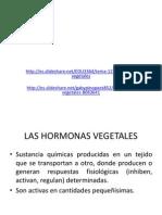 Hormonas Vegetal