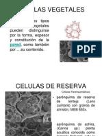 Celulas y Tejidos 2007