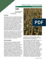 Pearl Millet Guide