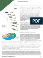 The History of Mammals _ Zafirov Biology