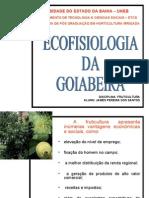 A Cultura Ecofisiologia Da Goiaba