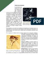 20.Filariasis