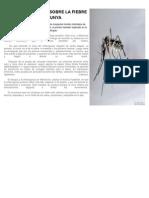 A Tener en Cuenta Sobre La Fiebre Chikungunya