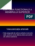 Anatomia Funcțională a Membrului Superior