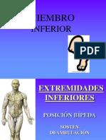 (4) Huesos Miembro Inferior