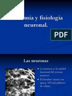 Anatomía y Fisiología Neuronal