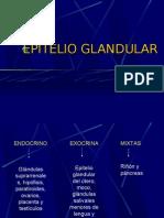 1 Epitelio Glandular