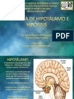Anatomiadehipotalamo Hipofisis 131024011214 Phpapp02