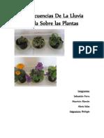 concecuencias de las plantas