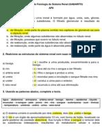 2. Atividade de Fisiol. Renal (Gabarito)- APS