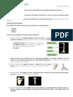 manual de introduccion a la radiologia equina pdf gratis