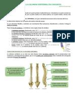 Anatomía Tema 3
