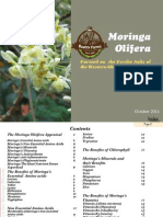 Moringa Olifera - Experience the Moringa Miracle