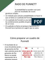 Cuadrado de Punnett