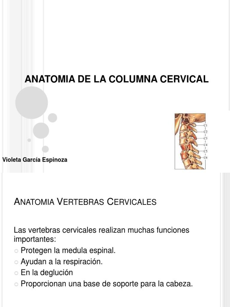 Anatomia Columna Cervical