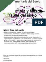 Micro Flora y Micro Fauna Del Suelo