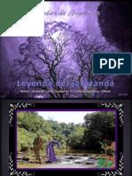 La Leyenda Del Jacaranda