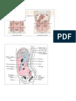 kumpulan gmbar hernia