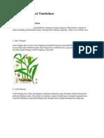Sistem Reproduksi Tumbuhan