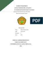 Laporan Praktikum Botani dan Sistematika Tanaman (Morfologi Akar Dan Batang Pada Tanaman)