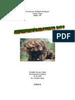 Deforestación en Puerto Rico