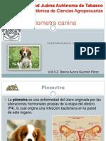 piometra canina.pptx