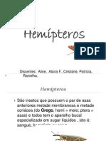 Hemípteros