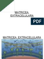 13 Capitolul 16 Matricea Extracelulara3