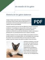 El Interesante Mundo de Los Gatos Siameses