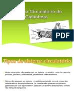 Sistema Circulatório Do Gafanhoto