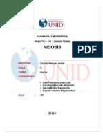 informe de meiosis.docx